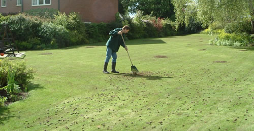 Lawn Aeration Clean Up