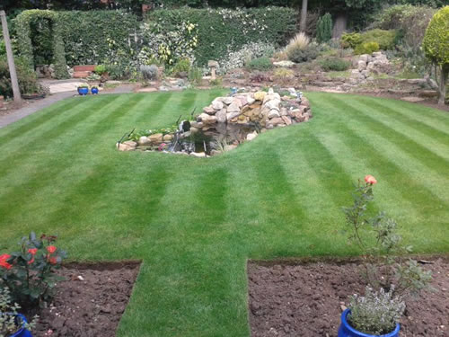 Unwatered Lawn